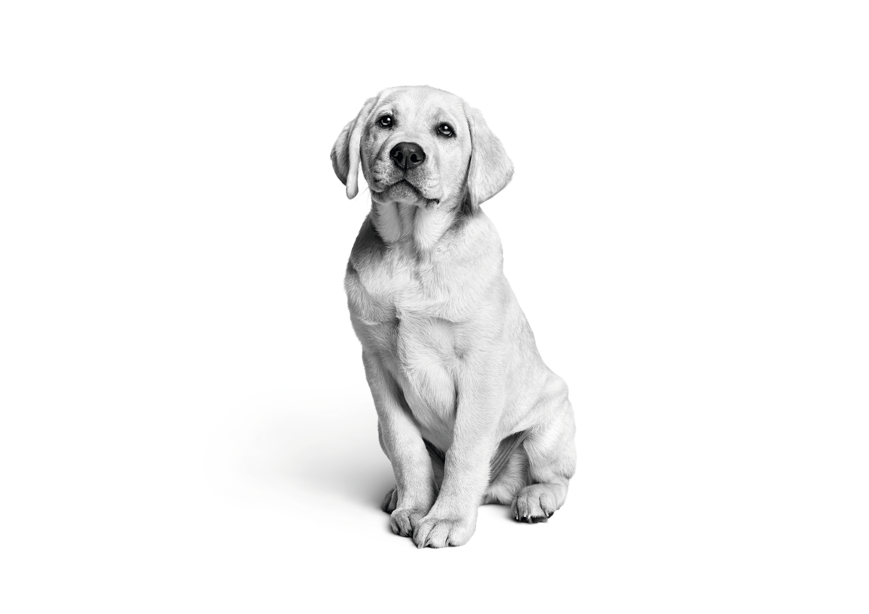 Getting A Puppy Care And Information Royal Canin Uk