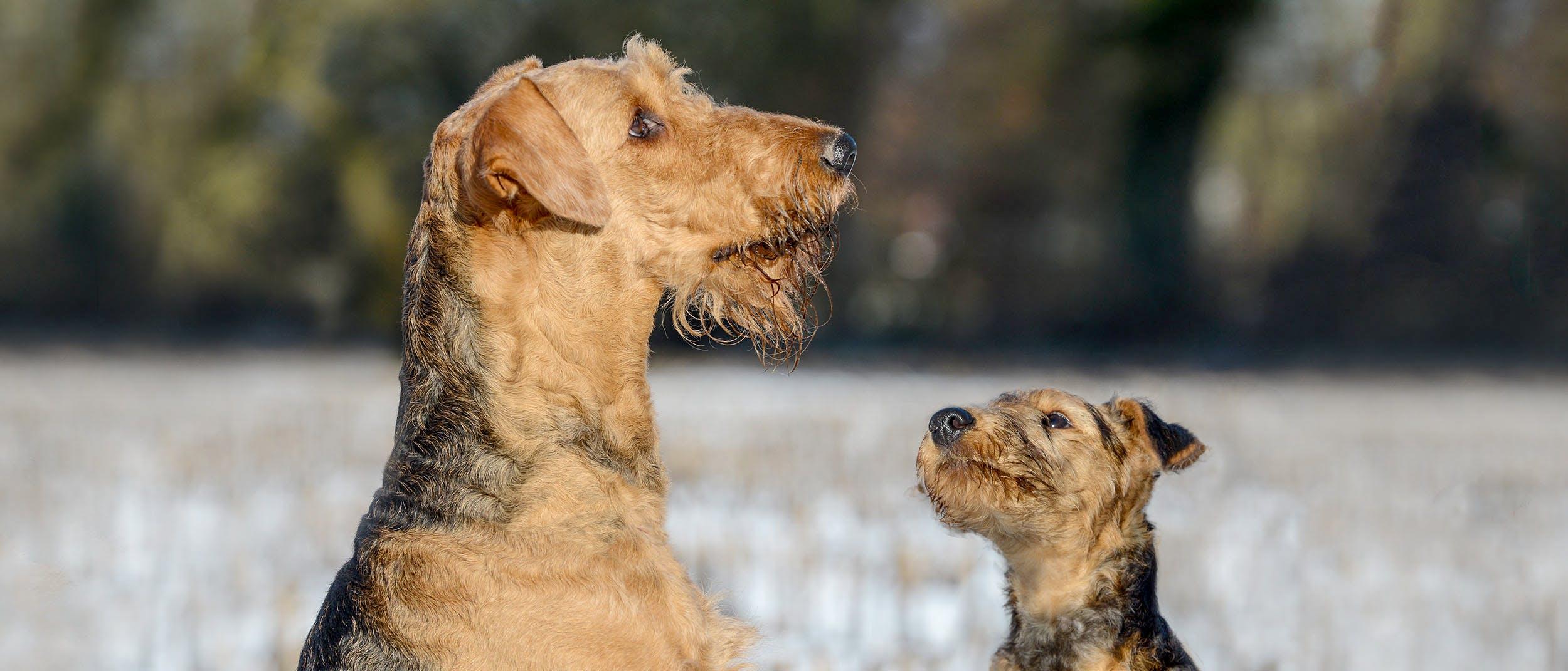 Dovrei adottare un cane o comprare un cucciolo?