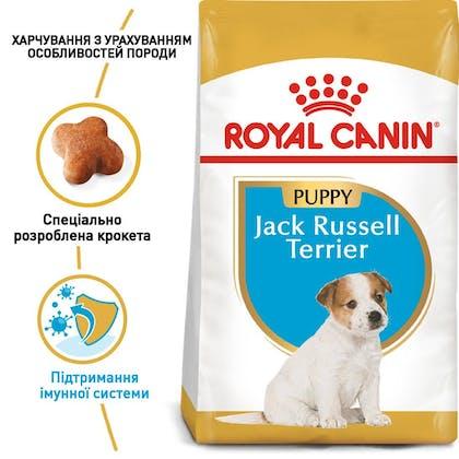 RC-BHN-PuppyJackRussell_1-UA.jpg