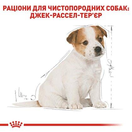 RC-BHN-PuppyJackRussell_5-UA.jpg