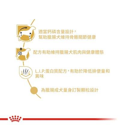 臘腸成犬DSA-2