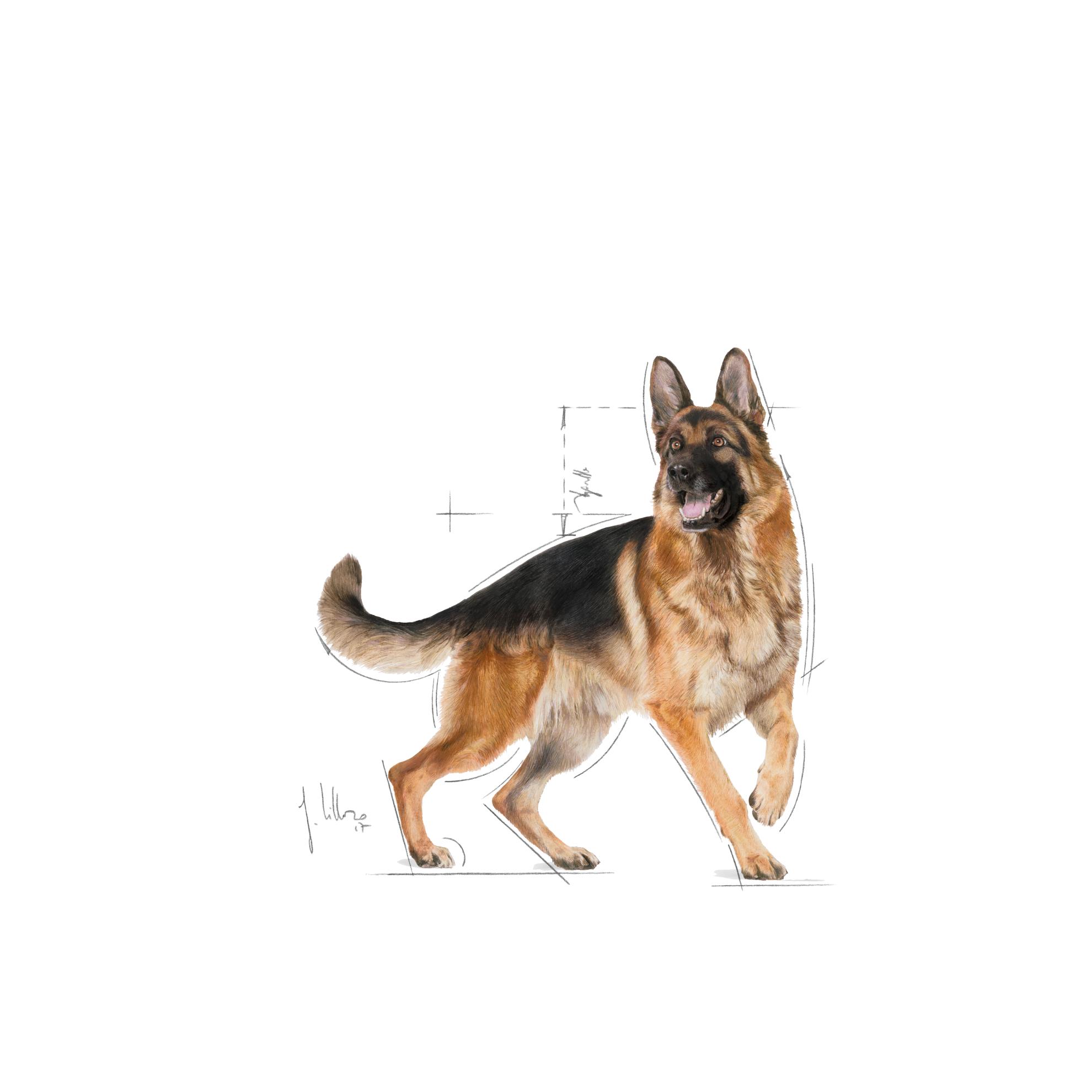 royal canin innehållsförteckning