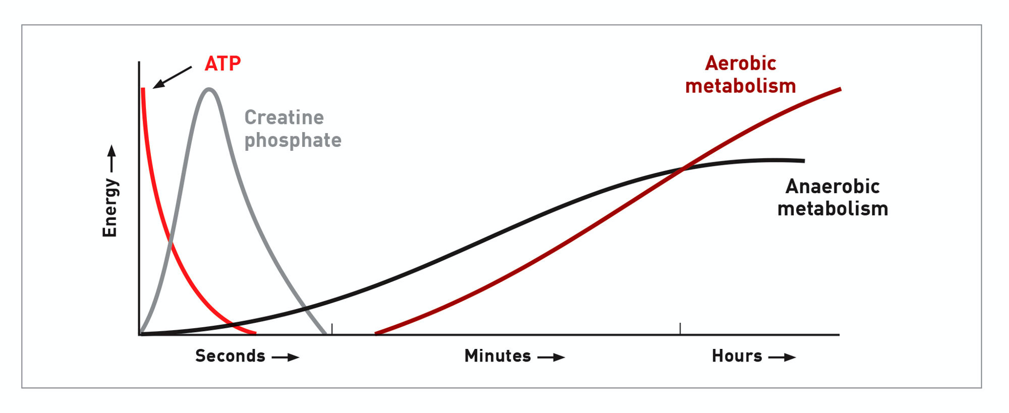 A graph showing the different energy sources that are used over time during exercise.