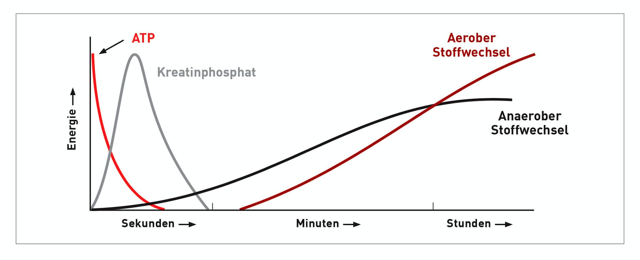 Diese Grafik zeigt den Verlauf der Nutzung verschiedener Energiequellen während einer körperlichen Anstrengung.