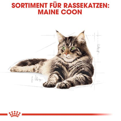 RC-FBN-MaineCoon-Sortiment_DE