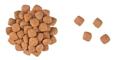 VCN 2011 - Kibbles and wet diet - MA-SD-SEC-VCND-CROC