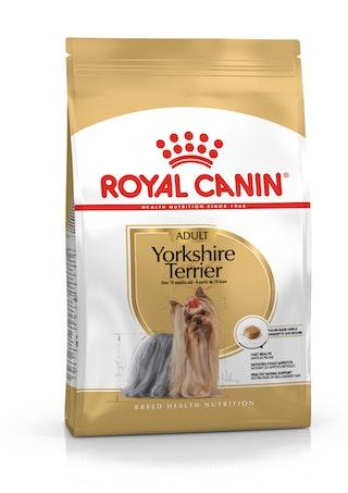 YorkshireTerrier Adult