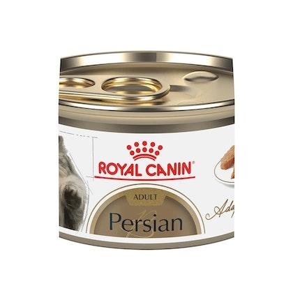 2019-C-PERSIAN-ADULT-SPT-FBN-LIS-B2
