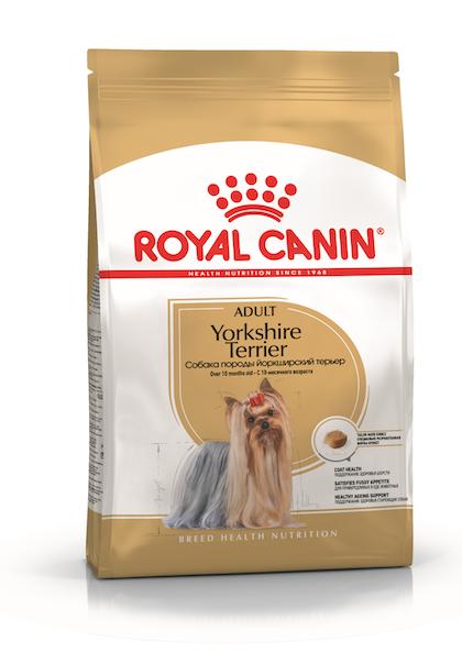 K_Yorkshire Terrier