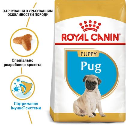 RC-BHN-PuppyPug_1-UA.jpg