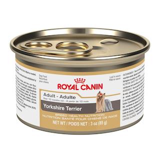 Yorkshire Terrier Adulto lata