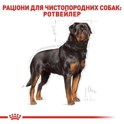 RC-BHN-Rottweiler_2-UA.jpg