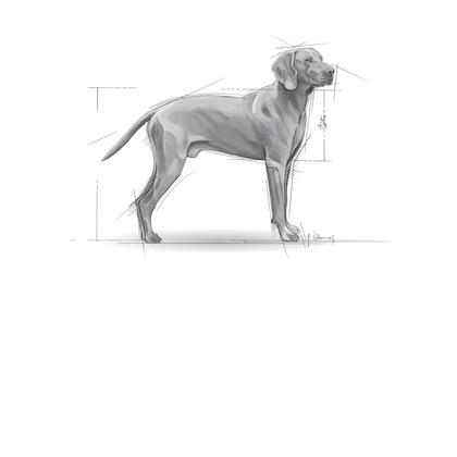 Medium Maxi Giant POS 2012 Illustrations - MA-DERM-SHN-ILLUSTR