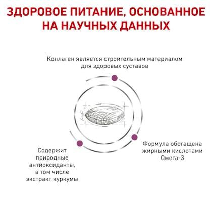 RC-VET-DRY-DogMobC2P_rus4