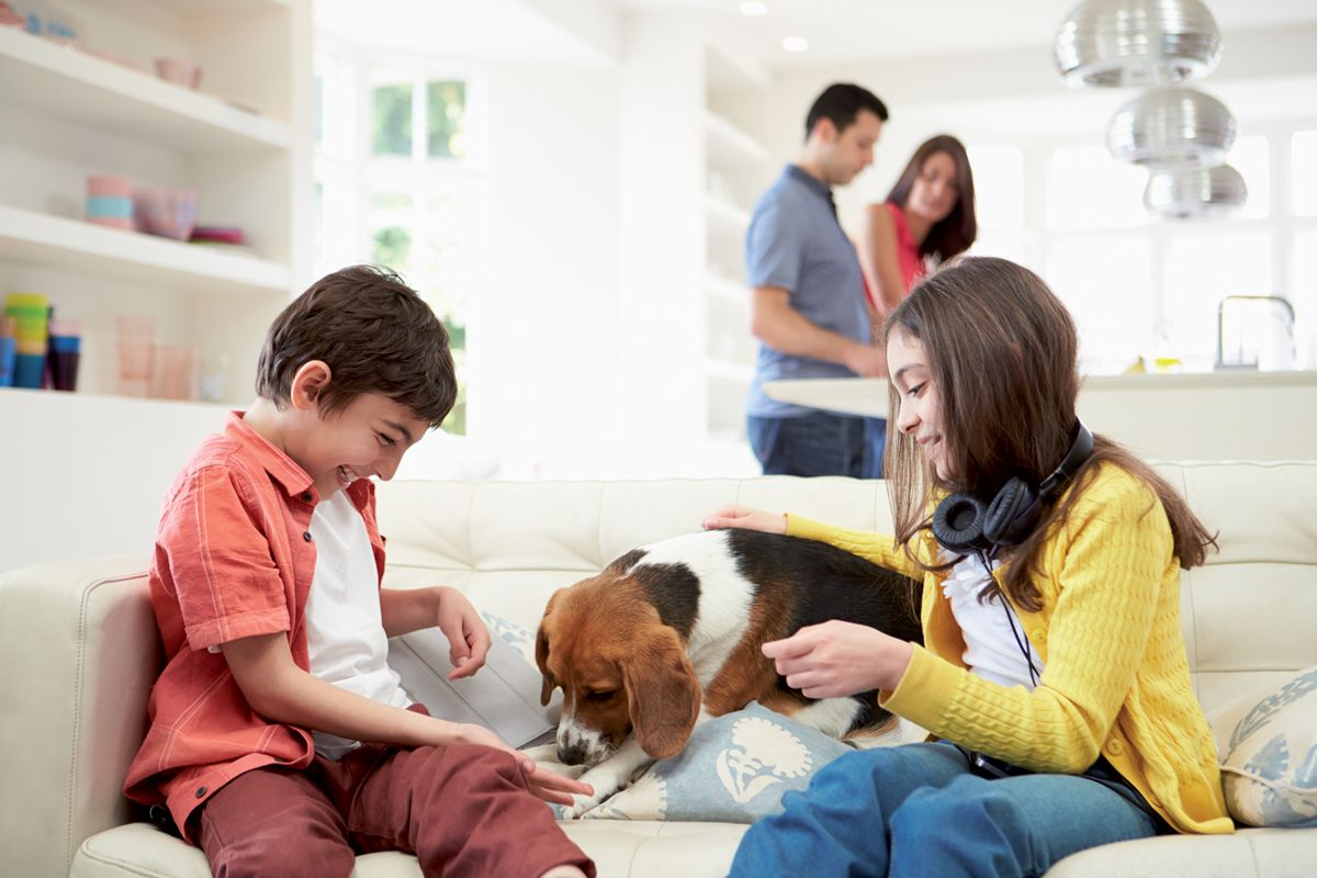 Figure 1. Most children will instinctively interact with animals in a positive way, and can derive huge pleasure in playing with a family pet. © Shutterstock