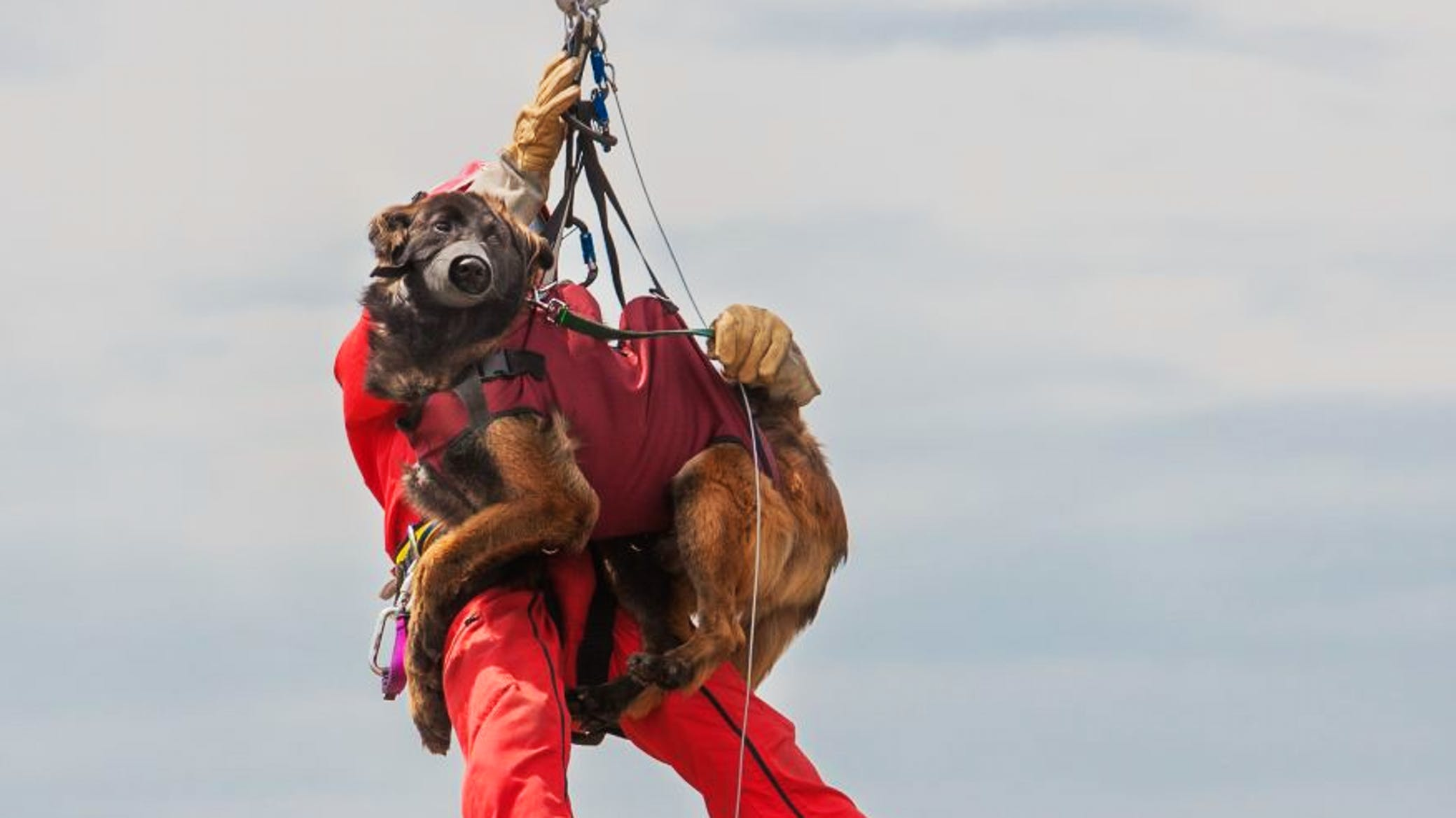 Rescue dog coming down from an helicopter