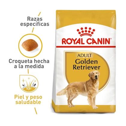 GOLDEN RETRIEVER ADULT COLOMBIA 1