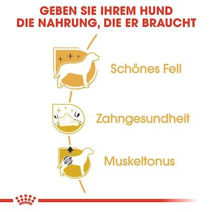 RC-BHN-Poodle-Trockennahrung_Vorteile_DE