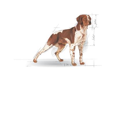 Medium Maxi Giant POS 2012 Illustrations - ME-AD-SHN-ILLUSTR