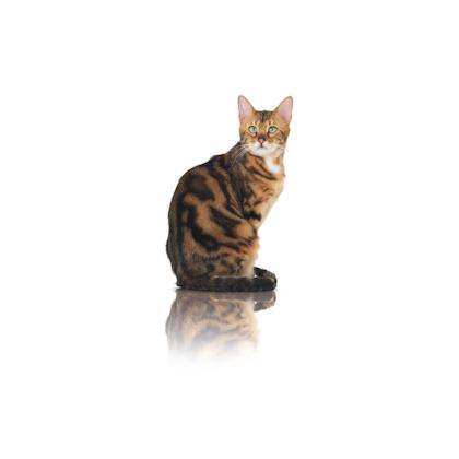 Pure Feline 2012 - Images - PUREF-N01-CAT