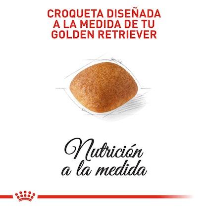 GOLDEN RETRIEVER ADULT COLOMBIA 3