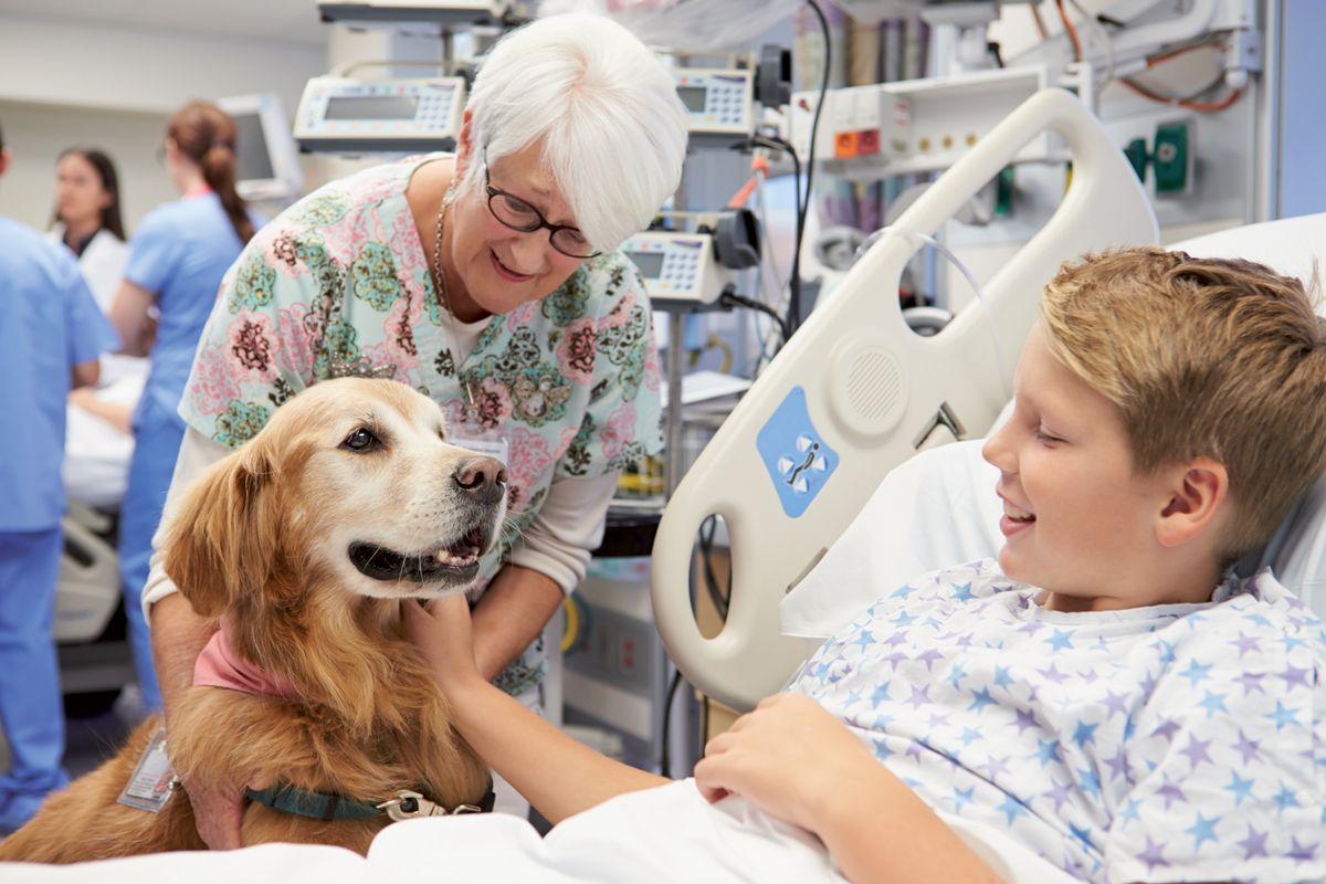 Abbildung 4. Nach einer Visite mit einem Therapietier zeigen hospitalisierte Kinder weniger Angst. © Shutterstock