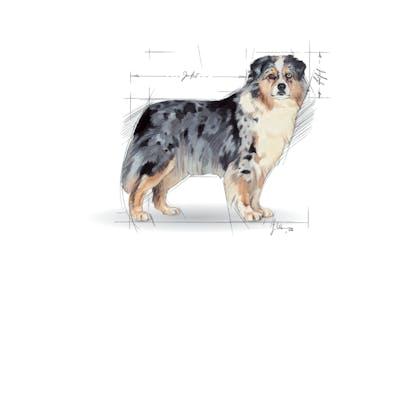 Medium Maxi Giant POS 2012 Illustrations - ME-STE-SHN-ILLUSTR