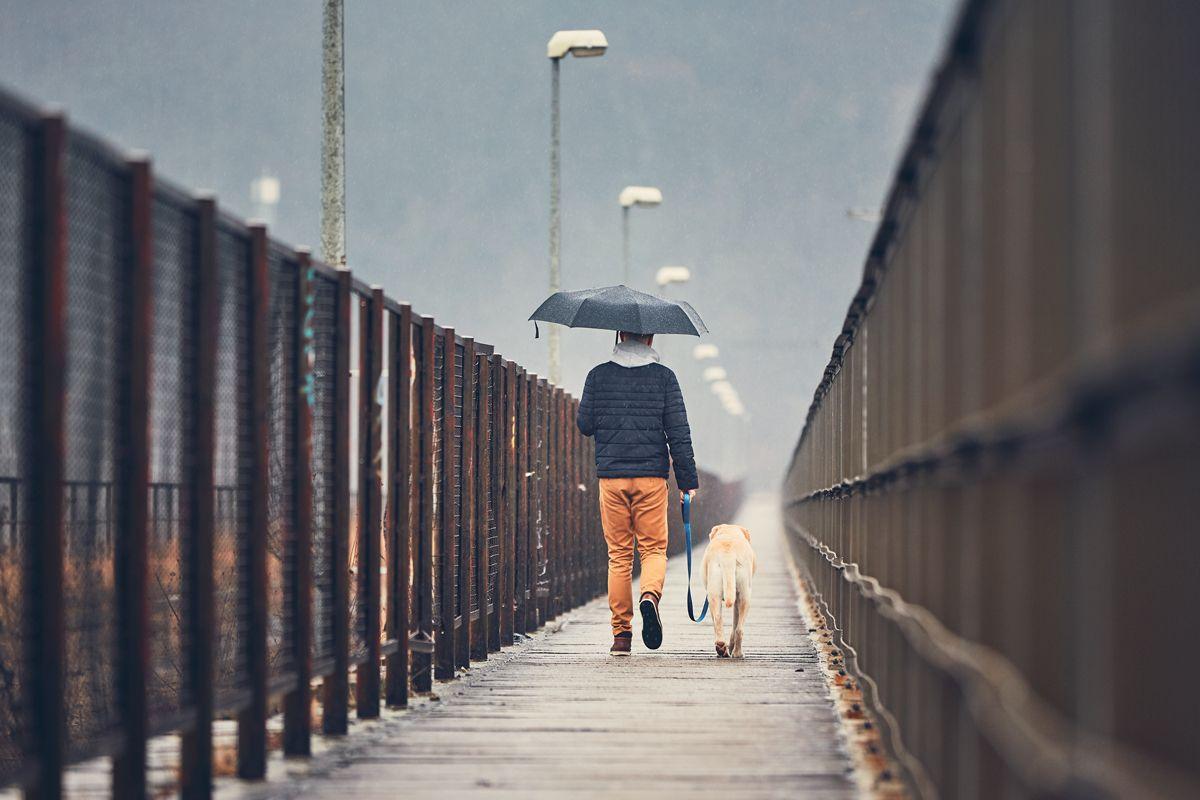 Generalmente, el mal tiempo disuade menos a las personas que tienen perro y siguen estando motivadas para salir a la calle.