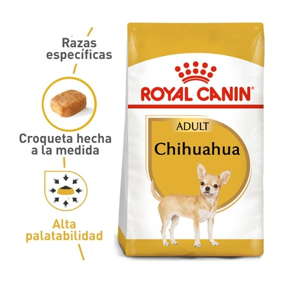 1 - CHIHUAHUA ADULT COLOMBIA