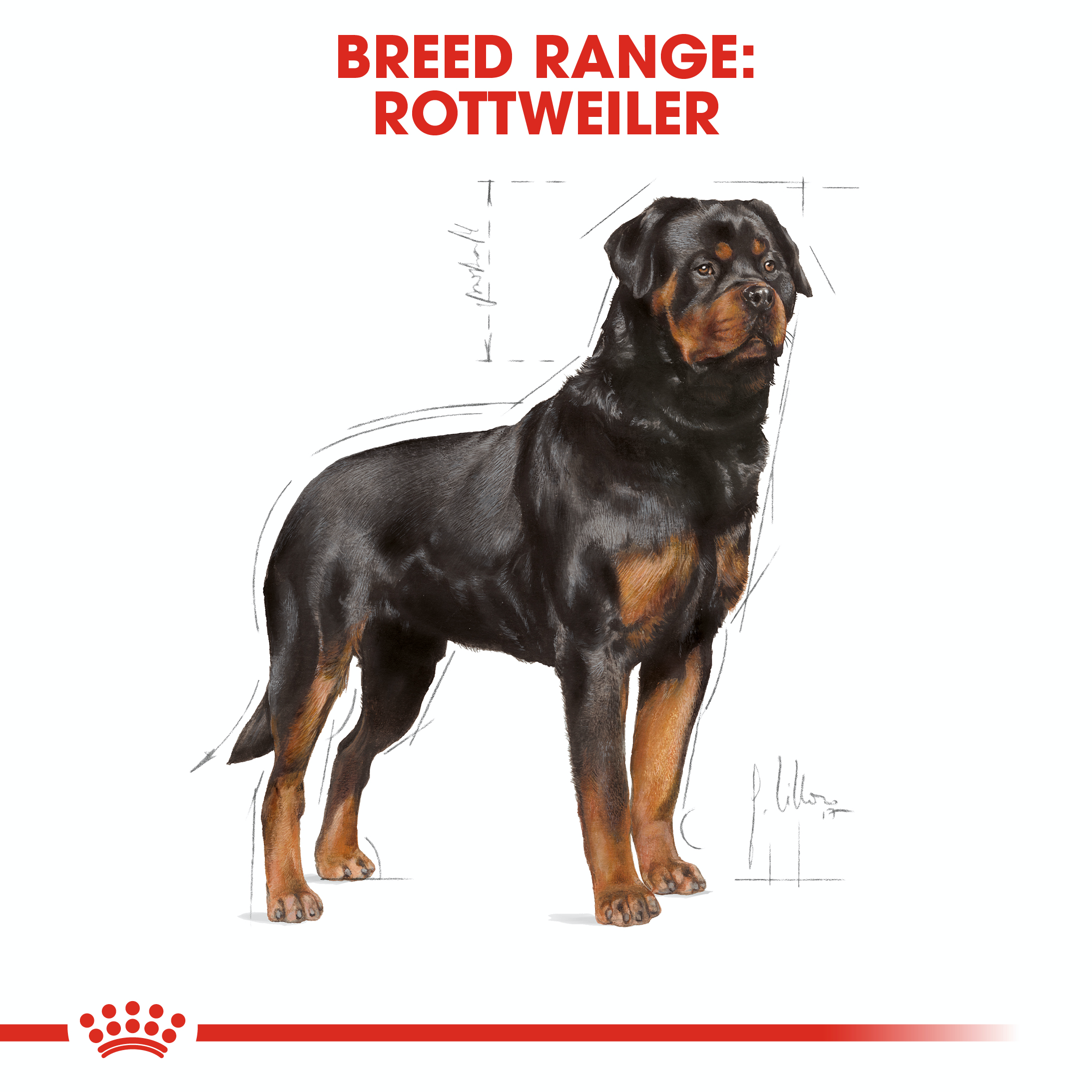 Rottweiler Adult Kering Royal Canin