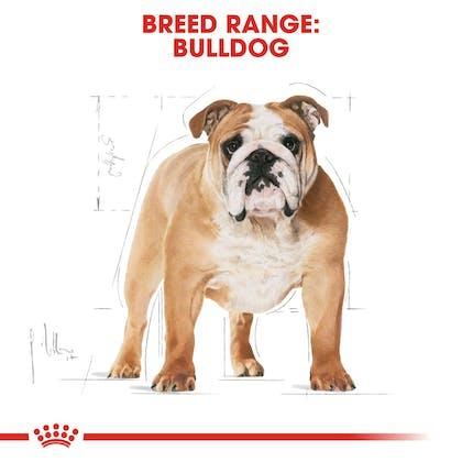 BHN-Bulldog-CV-Eretailkit-1