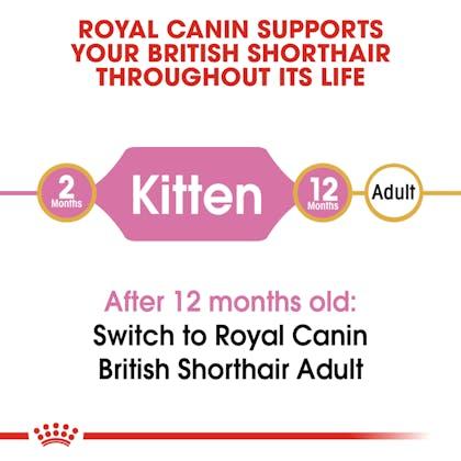 RC-FBN-KittenBritishShorthair-CV-EretailKit-1