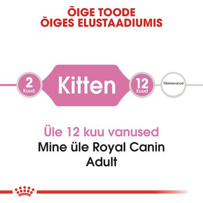 RC-FHN-Kitten-CV1_003_ESTONIA-ESTONIAN