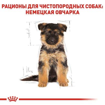RC-BHN-PuppyGS_5-RU.jpg