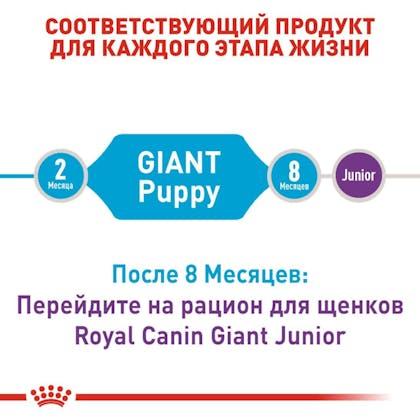 RC-SHN-PuppyGiant_2-RU.jpg