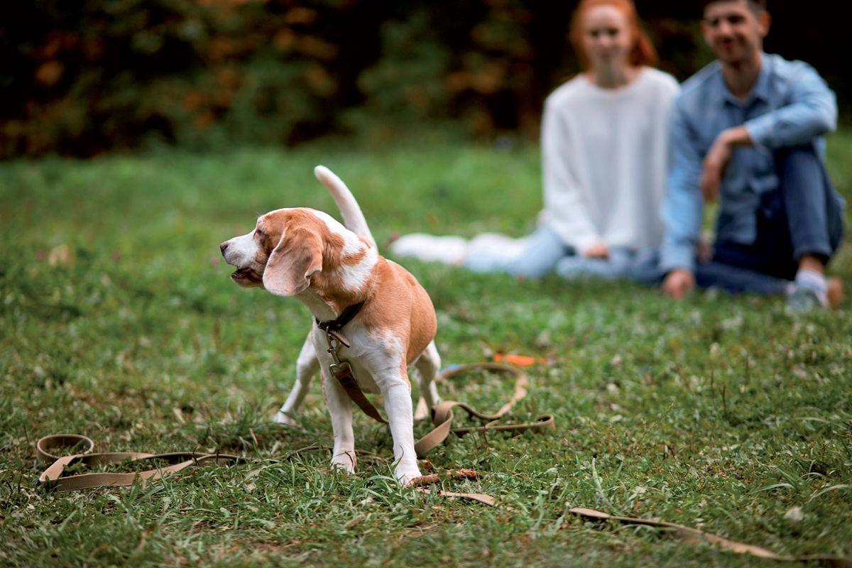 """El nivel de actividad de los paseos con el perro puede ser muy variable; sentarse en el parque mientras el perro corre a nuestro alrededor no es realmente """"pasear""""."""