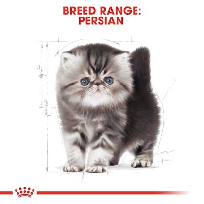 RC-FBN-KittenPersian-CV-EretailKit-4
