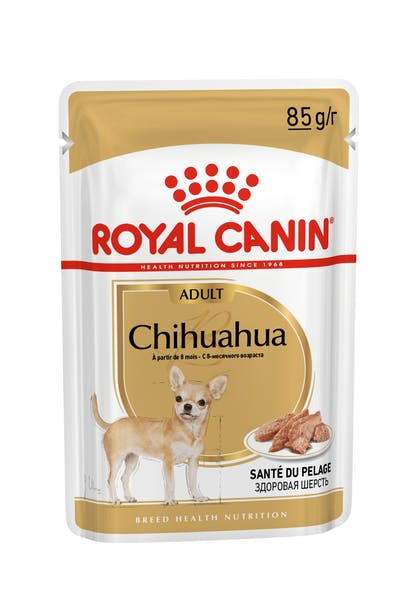 BREED-18_CHIHUAHUA_N_POUCH_85