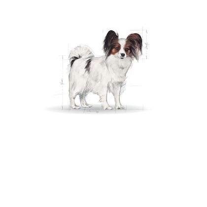 Medium Maxi Giant POS 2012 Illustrations - XS-AD-SHN-ILLUSTR