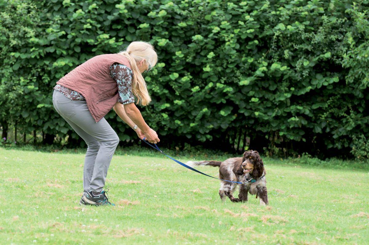 """Entrenamiento para que el perro acuda a la llamada con correa: el propietario llama al perro por su nombre y le dice """"ven"""" para que se gire y vaya hacia él a por un premio."""
