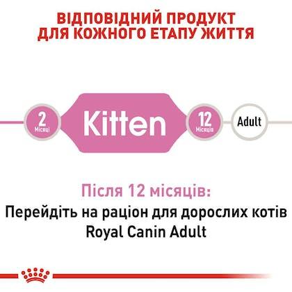 RC-FHN-Kitten_2-UA.jpg