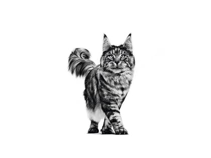 MAINE COON ADULT - VET VHN EMBLEMATIC