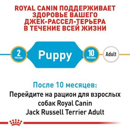RC-BHN-PuppyJackRussell_2-RU.jpg