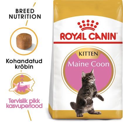RC-FBN-KittenMaineCoon-BREED KITTEN_002_ESTONIA-ESTONIAN