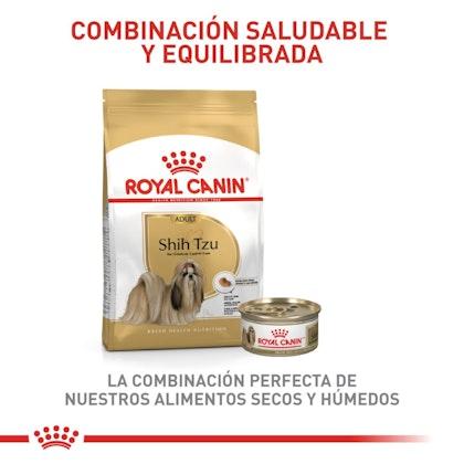5 - SHIH TZU ADULT COLOMBIA