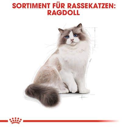 RC-FBN-Ragdoll-Sortiment_DE