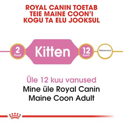RC-FBN-KittenMaineCoon-CV1_002_ESTONIA-ESTONIAN