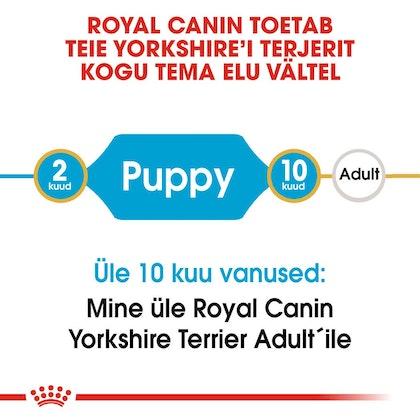 RC-BHN-PuppyYorkshire-CM-EretailKit-1-et_EE