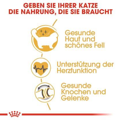 RC-FBN-Ragdoll-Vorteile_DE