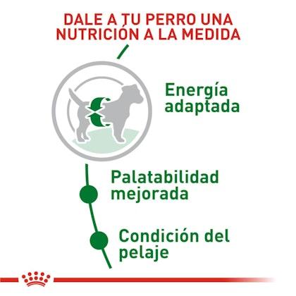 2 - MINI ADULT COLOMBIA